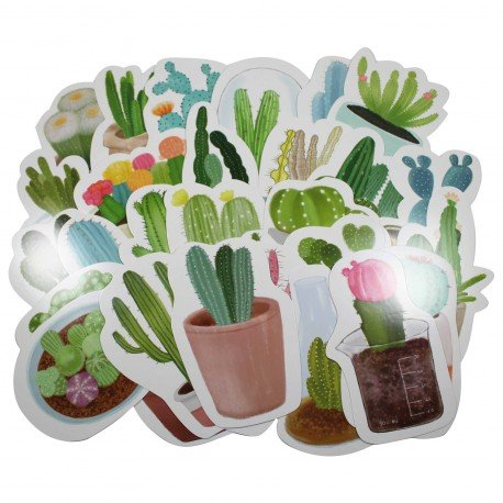 Lot de 5 cartes postales - cactus
